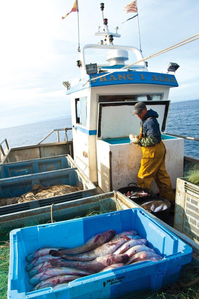 Sortierte Fische Fischerboot Roses