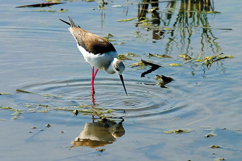 Vogelschutzgebiet am Mittelmeer
