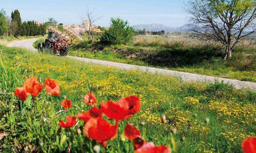 Blühende Landschaften im Empordà