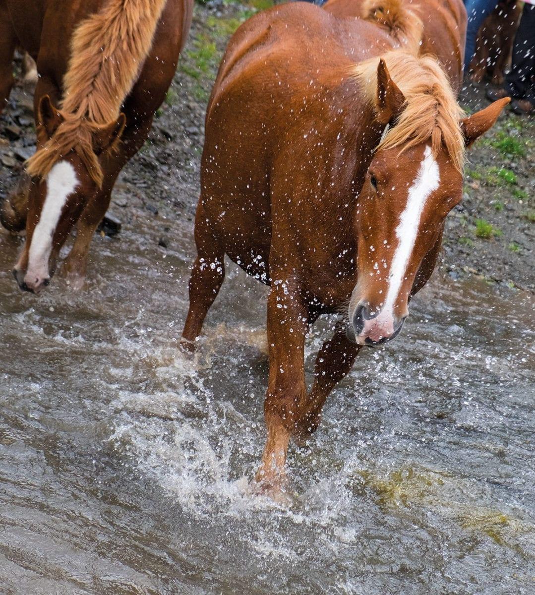 Pferd folgt Herde durch Fluss