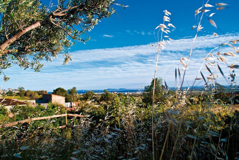 Meerblick vom Weinberg aus bei Bodega Espelt an der Costa Brava im Empordà